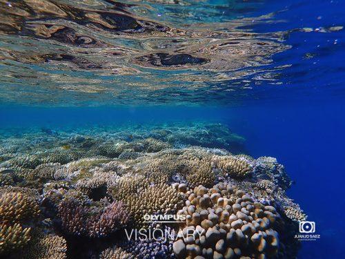arrecife-olympus-tg-5