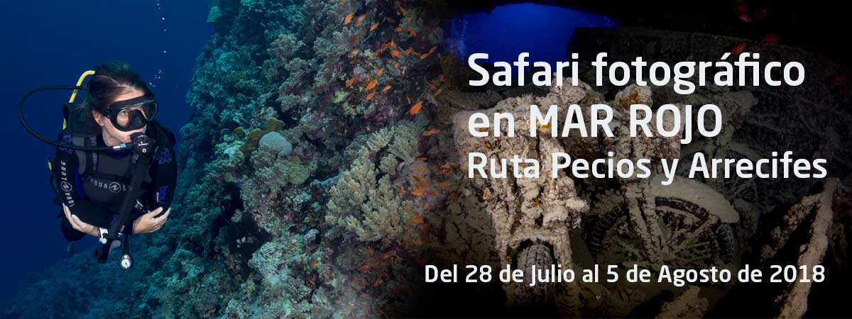 Safari-fotografia-submarina Mar Rojo