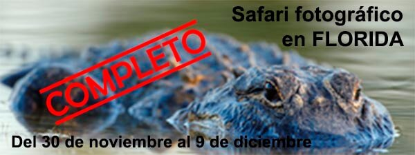 safari-florida-completo