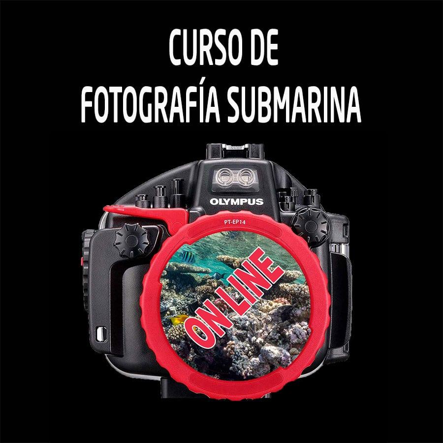 Curso de fotografia submarina on line